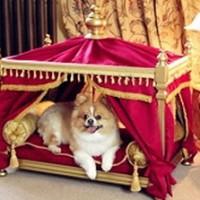 Luxurious Dog Houses