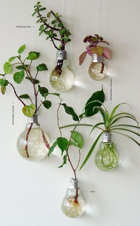 Bulb Decoration