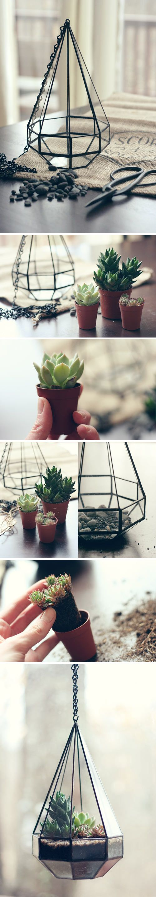 Adorable DIY Terrariums