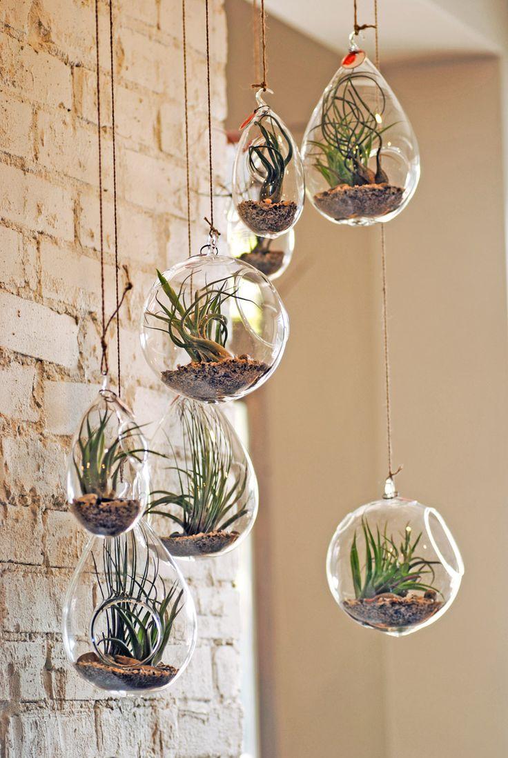 DIY Plant Project