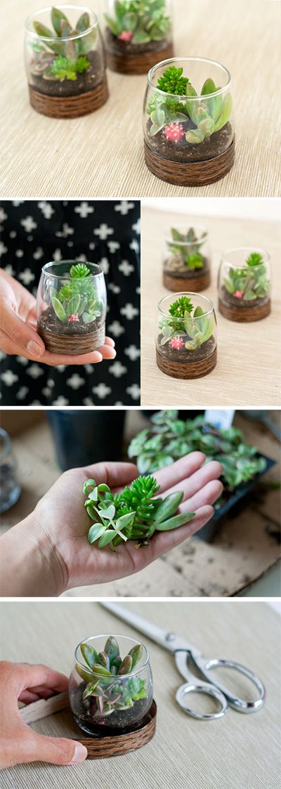 Wood Base Terrariums