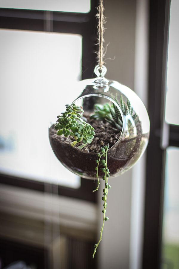 20 hanging planter ideas for home12