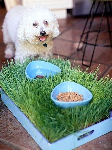 20 Useful Diy Pet Food Stations Pretty Designs