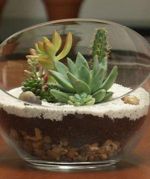 20 Ideas to Decorate Desks with Succulent