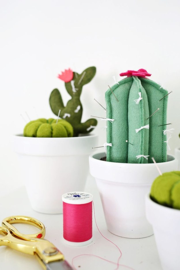 Pin-storing Cacti