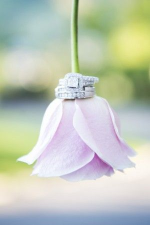 Blush Rose and Wedding Rings