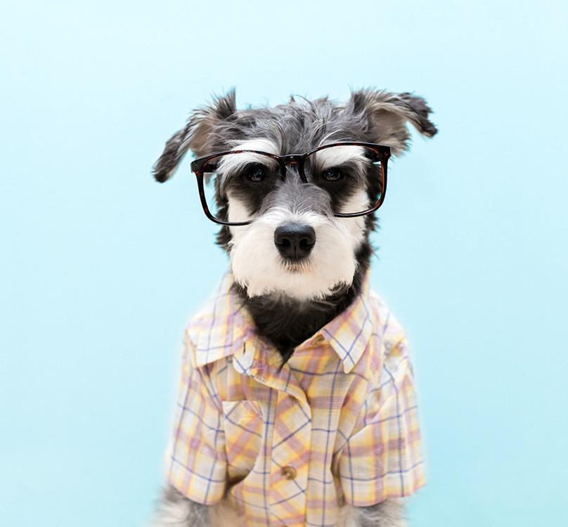 Top-10 der modischsten Haustiere aller Zeiten